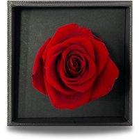 Preserved Red Rose in Square Vanity Box.