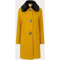 Aster Yellow Coat, Yellow