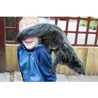 2 for 1 Binturong Experience for Two at Hoo Farm Animal Kingdom - Farm Gifts