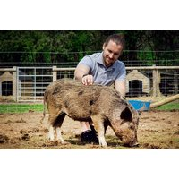Pig Enthusiast Experience for Two at Kew Little Pigs - Pigs Gifts