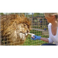 Image of Entry to Linton Zoo with a Big Cat Meet and Feed for One