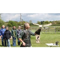 Image of A Bird of Prey Falconry Experience for Two