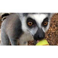 Image of Entry to Exotic Zoo with a 30 Minute Lemur Experience for Two