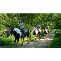 Image of 90 Minute Western Trail Ride for Two in the New Forest National Park