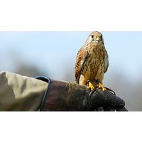 Image of Bird of Prey Falconry Day