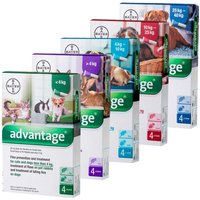 Advantage Spot On Flea Treatment 100 Medium Dogs 4 - 10kg (4 pipettes)