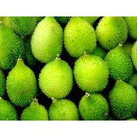 20-spine-gourd-seeds-momordica-dioica-seeds-buy-now-kantola-seed-kakrol-online