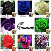 1000-rare-multi-colors-rainbow-rose-seeds-50-x-20-kinds-of-different-colors