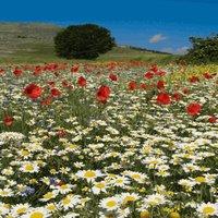 Southeast Wildflower Seed Bombs *Grow Flowers Anywhere!*