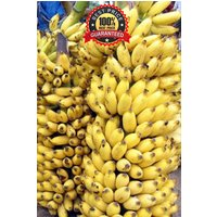 100-fresh-musa-acuminata-edible-dwarf-banana-tree-plant-seeds-tropical-fruit