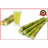 300-green-sweet-sugar-cane-seeds-rum-syrup-rock-candy-sugar-crystals