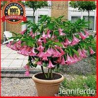200pcs-poeetd-plant-brugmansia-flower-angel-trumpet-fragrant-datura-tree-seeds