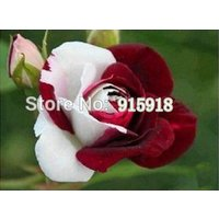 flower-seeds-200pcs-jade-gemstone-rose-bush-flower-seeds-400-seeds-potted-plants