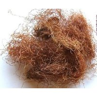 corn-silk-herb-tea-zea-mays-mealy-silk-diuretic-kidney-edema-bulk-free-shipping