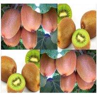 50-chinese-kiwi-fruit-seeds-actinidia-chinensis