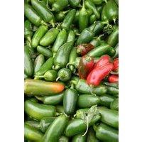 bulk-organic-jalepeno-pepper-seeds-5-lb