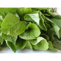 organic-heirloom-3600-seeds-amaranth-chinese-spinach-green-edible-vegetable