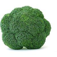 bulk-organic-broccoli-seed-5-lb