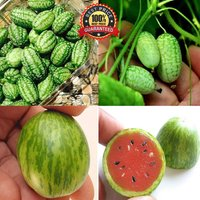 100-pcs-mini-watermelon-seeds-cucamelon-red-miniature-fruit-home-garden-plant