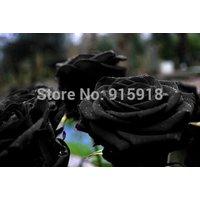 flower-seeds-400-pcs-seeds-black-rose-seeds-your-lover-plant-for-sweet-lover