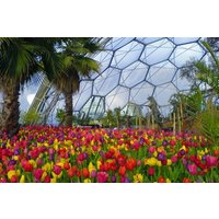Family Entrance To The Eden Project Picture