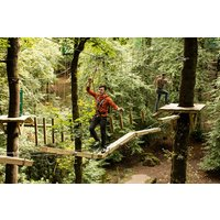 Zip Trek For One At Treetop Trek Picture