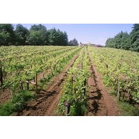 Tour And Tasting For Two At Chiltern Valley Winery And Brewery Picture