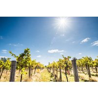 Wine Tasting Experience for Two at Stanlake Park Wine Estate - Buyagift Gifts