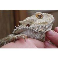 Reptile Encounter Picture