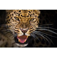 Big Cat Encounter (weekdays) Picture
