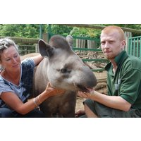 Tickle A Tapir Experience For Two At Paradise Wildlife Park Picture