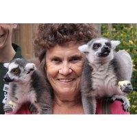 Meet The Lemurs Experience At Paradise Wildlife Park Picture