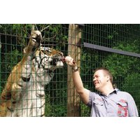 Feed The Big Cats By Hand At Paradise Wildlife Park - Weekdays Picture