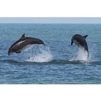 Dolphin Watching for Two - Dolphin Gifts