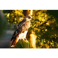 2 for 1 Half Day Falconry Experience with Coda Falconry - Falconry Gifts