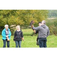 Half Day Falconry Experience At The Falconry School Picture