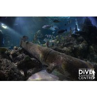 Diving with Sharks Experience at Skegness Aquarium - Diving Gifts