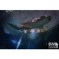 Diving with Sharks Experience at Skegness Aquarium - Special Offer - Diving Gifts