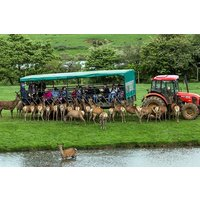 Family Day on The Farm with a Deer Safari at Snettisham Park - Farm Gifts