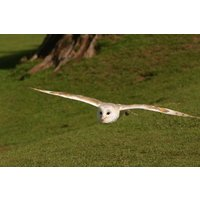 Owl Encounter in Derbyshire with BB Falconry - Falconry Gifts