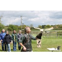 Bird Of Prey Falconry Experience Picture