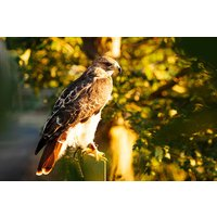Two Hour Falconry Experience for Two with Coda Falconry - Falconry Gifts
