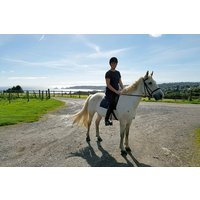 Horse-riding Lesson For One At Clyne Farm Centre Picture