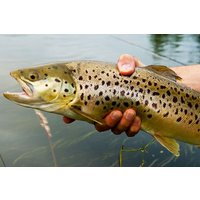 Introduction To Trout Fly Fishing Experience For One Picture