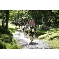 Two Hour New Forest Horse Riding Experience for One - Riding Gifts