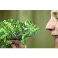 Meet The Reptiles And Afternoon Tea For Two At Kirkley Hall Zoo Picture