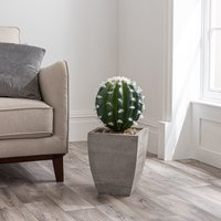 Cactus in Wood Planter Green