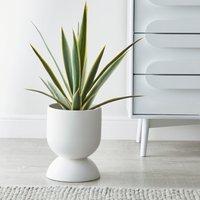 Ceramic Planter White 30cm White