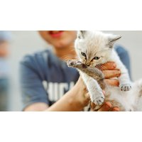 Animal Care & Psychology Diploma Online Course