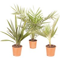 Set of 3 Summer Palm Trees